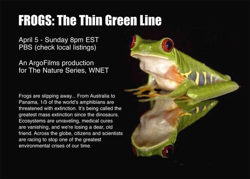 Frogs the thin green line